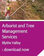 Arborist and tree management services